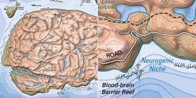 brainland-1.jpg